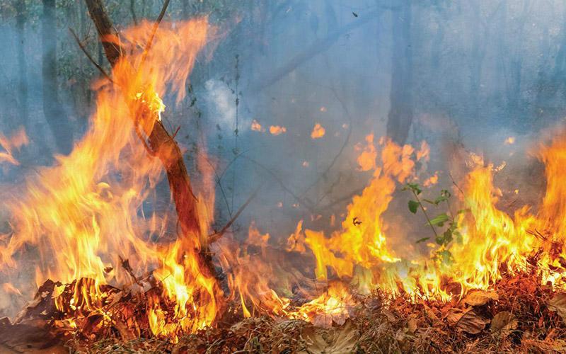 BAL Ratings - Bushfire Attack Level